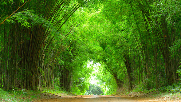 Bamboo Biomass Renewable Energy Company